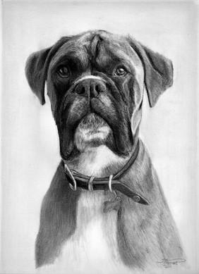 'Dexter', A4 pencil portrait, 2019