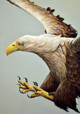 Pet portrait, White tailed sea eagle painting