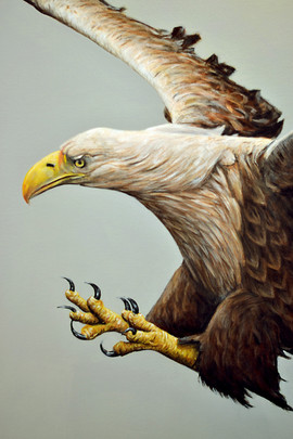 White-tailed Sea Eagle, Acrylic, 2016