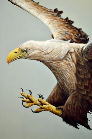 White-tailed Sea Eagle, Acrylic, 2016