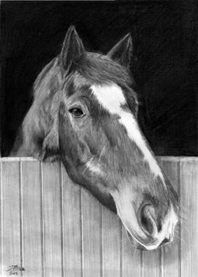 'Brydie', A4 pencil portrait, 2019