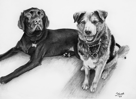 'Freddie & Buddy', Pencil, 2018