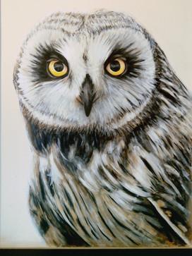 Short-Eared Owl, Mural