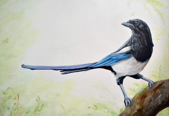 Magpie, Mural, 2017
