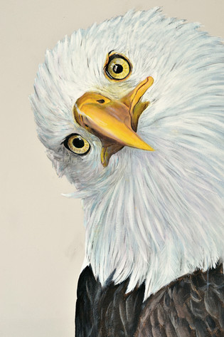 Bald Eagle, Mural