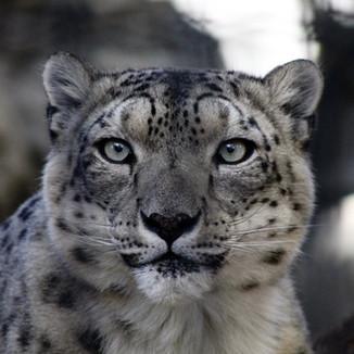 Denver Zoo, CO