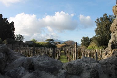Mt. Vesuvius behind an orchard
