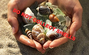 Do not collect shells!