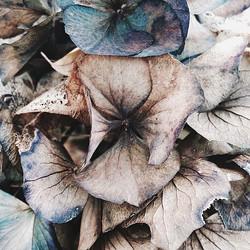 les fleurs