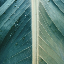 Plant Tones 🌿