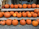 Home - Aut - Pumpkins.JPG