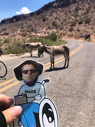 Flat Blake (paper boy cutout) held up in front of donkeys standing in the road