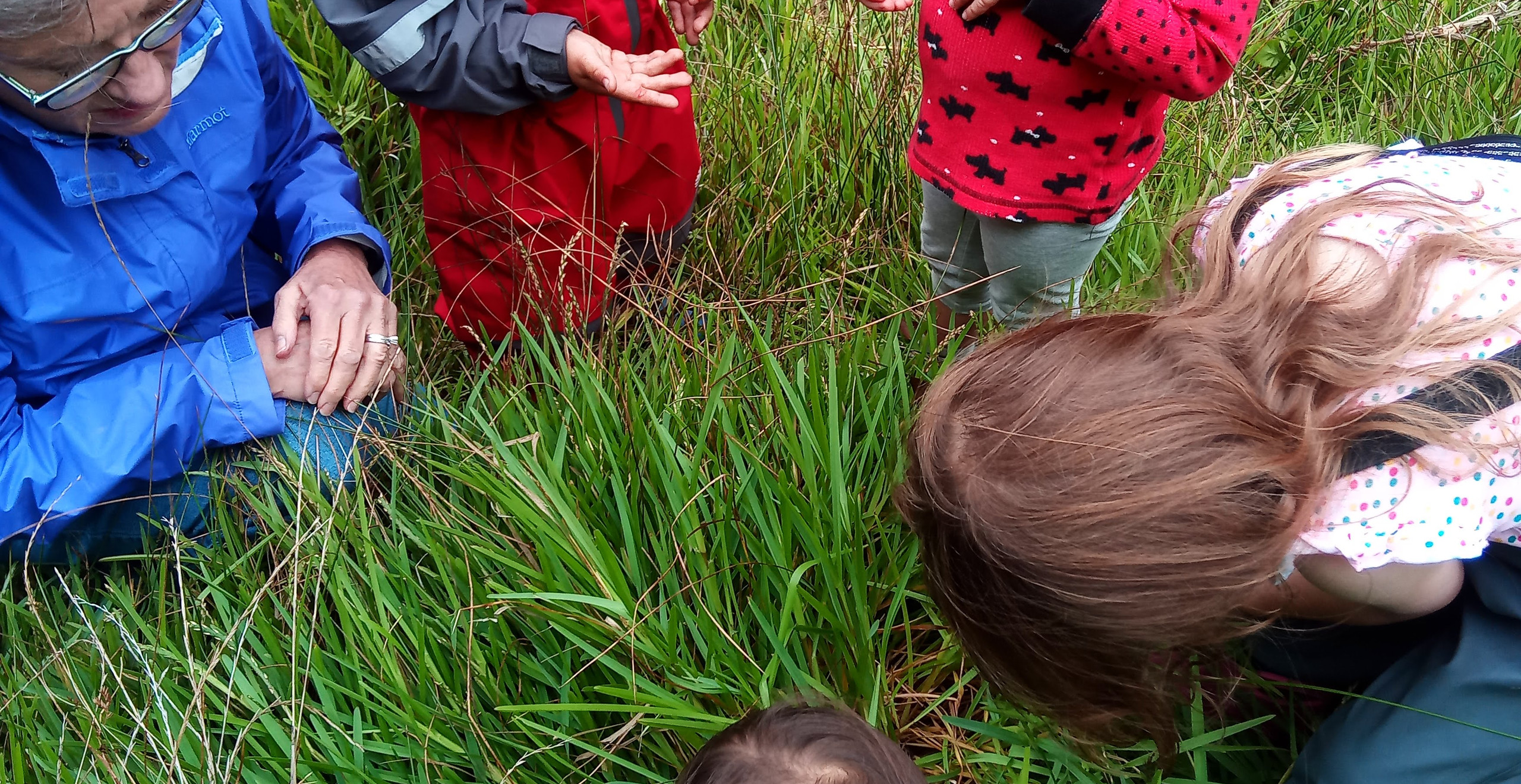 Cheryl, Nathan, Mina, Luka, and Alana look at ladybugs and into the grass where many ladybugs were found.