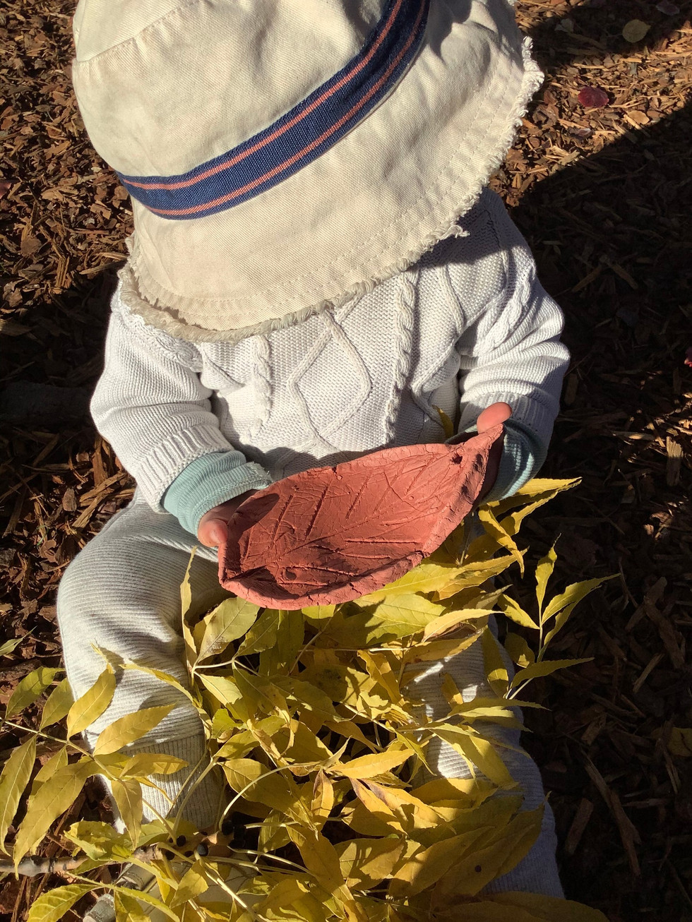 Yellow leaves and leaf.jpg