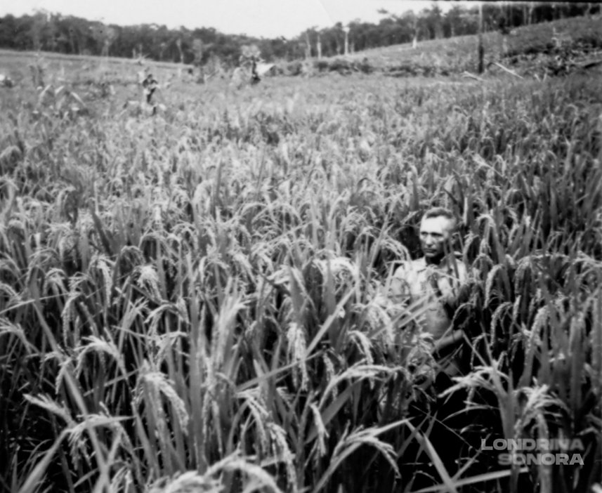 Um homem no meio de uma grande plantação. Só sua cabeça está visível.