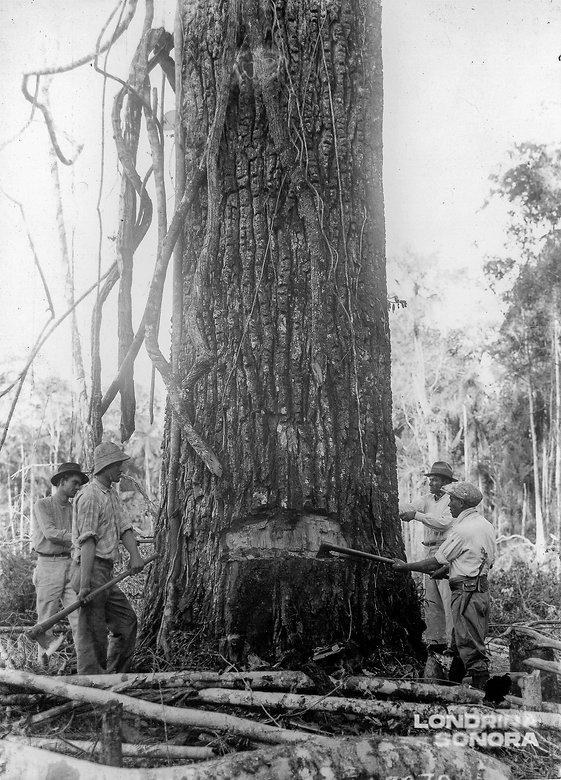 quatro pessoas com machados ao redor de um imenso tronco de ávore.