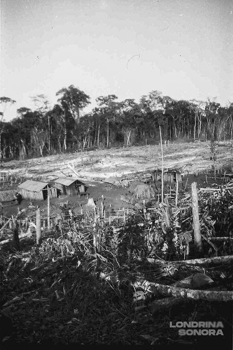 Terreno desmatado com duas construções na parte esquerda. Árvores altas no fundo.