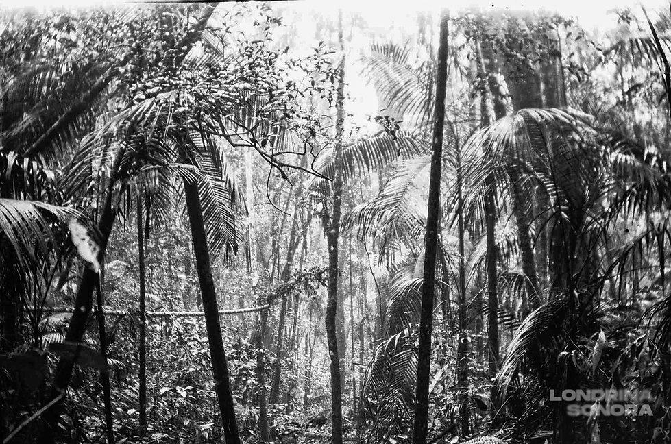 Vegetação abundante. Algmas palmeiras em destaque.