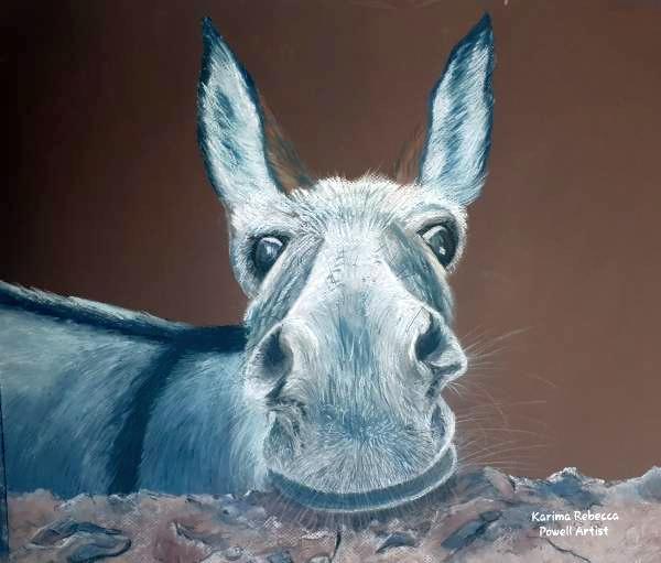 Congo the Rescue Donkey