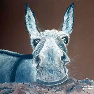 Congo the Rescue Donkey.jpg