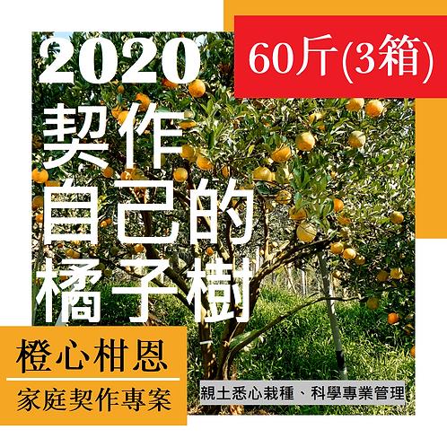 契作自己的橘子樹(60斤/3箱)