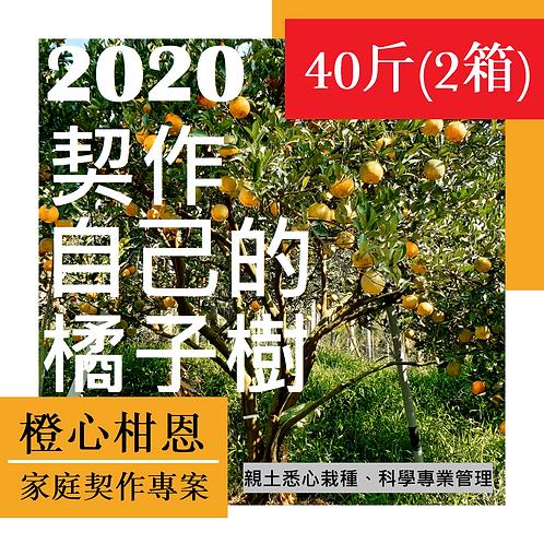 契作自己的橘子樹(40斤/2箱)