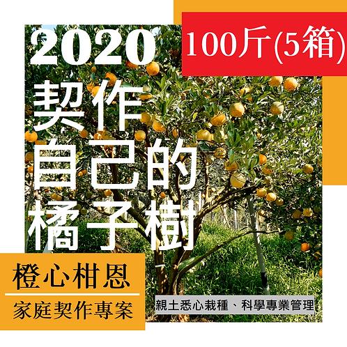契作自己的橘子樹(100斤/5箱)