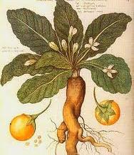 Plantes Remarquables