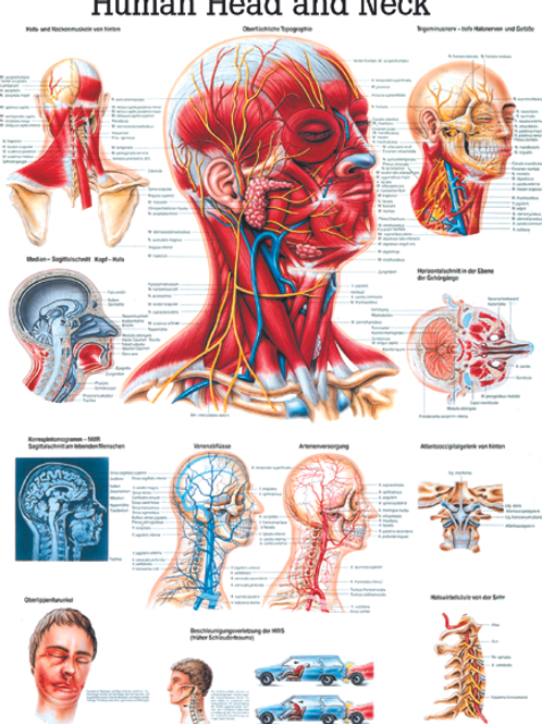 Head and neck poster