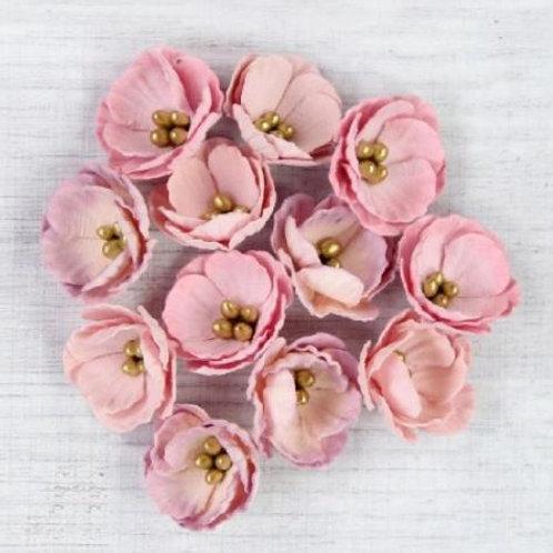 Little Birdie Flowers Daisies Blush