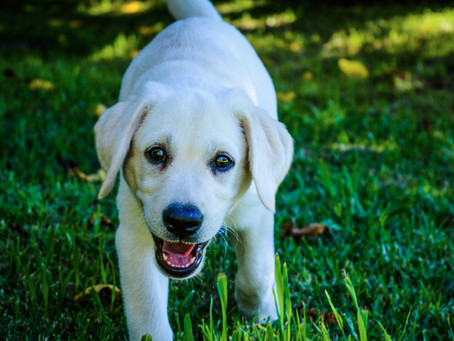 Things to Think about Before You Bring Your New Dog Home