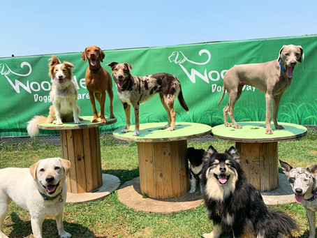 Should Your Dog Go To Doggie Daycare?