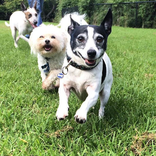 With #WoofGroup it's always an adventure 😜🐾🐾👍 #dogsofinstagram #icanteven #instapuppy #cutepets