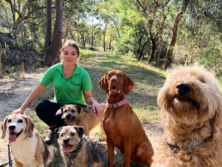 Dog Walking: How to Choose the Perfect Dog Walker for Your Pet