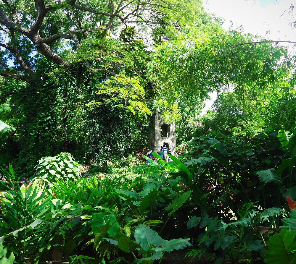 some six acres have now been converted into splendid botanical gardens, with tropical plants, an old bell tower and a 400-year-old Saman tree. Guides are available to help select the best trails and share information about the ecological diversity of St. Kitts.