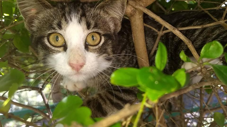 Nuestro gato escondido en el arbusto