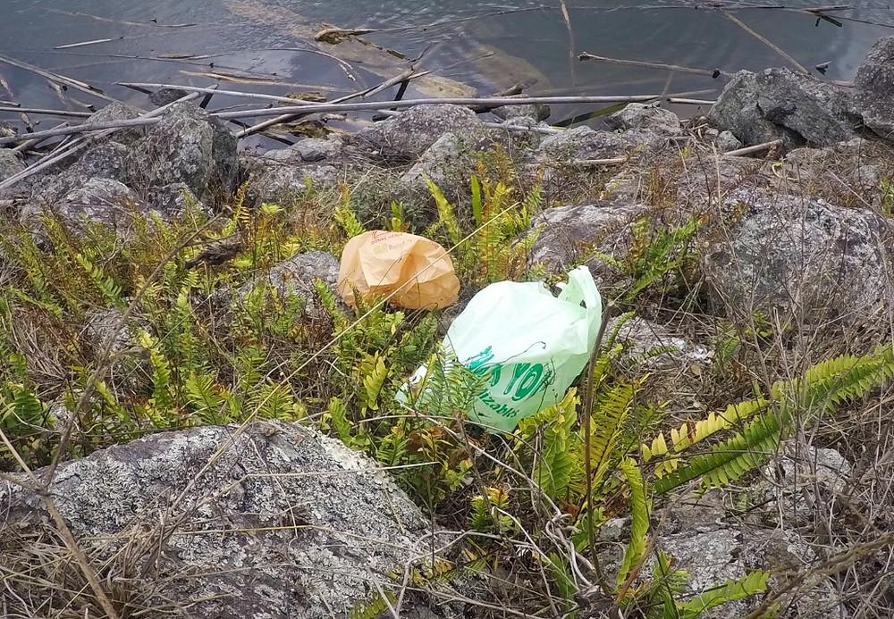 Bolsas Plásticas en el Lago Garzas en Adjuntas