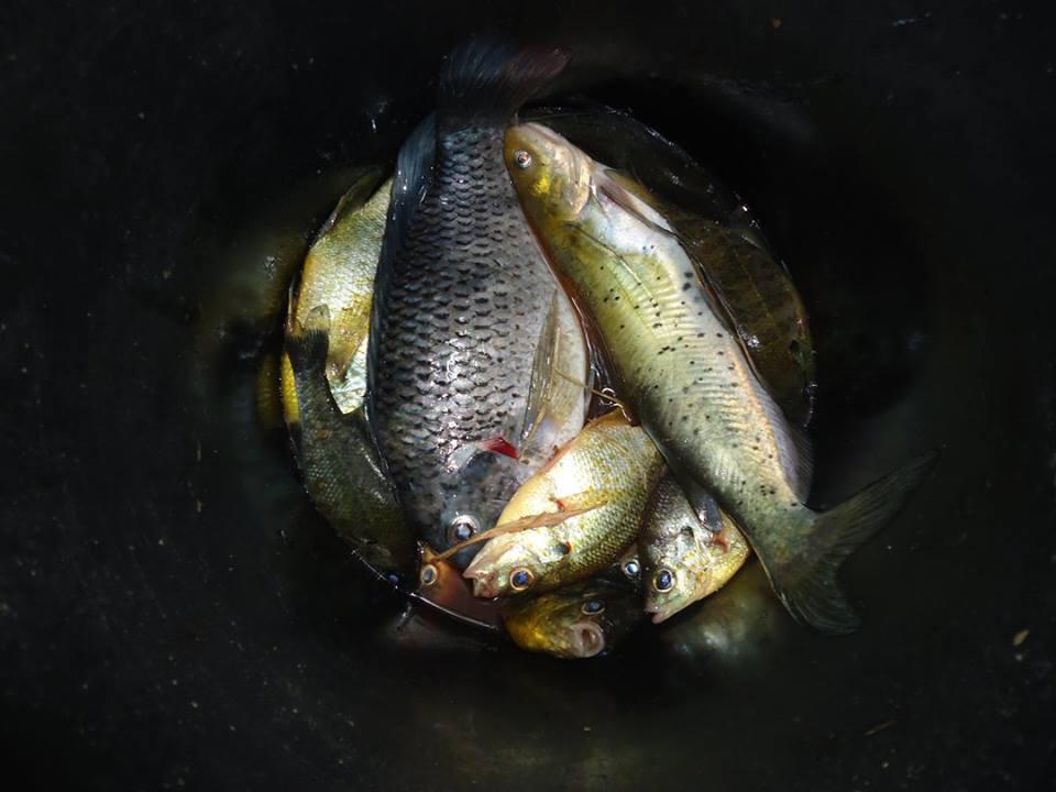 ¡La pesca del día!
