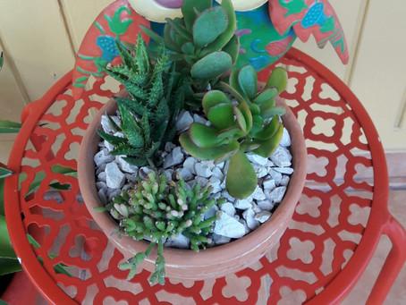Mini Cactus Bowl