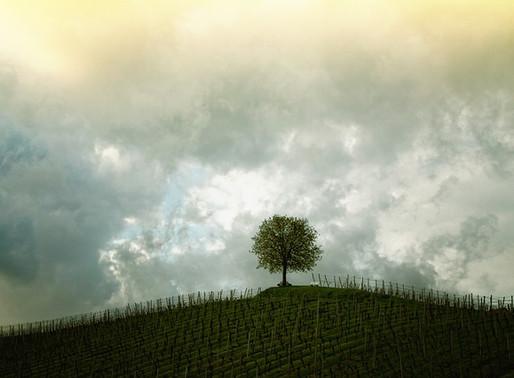 Lecciones Aprendidas de un Árbol