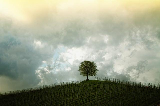 Foto de https://pixabay.com/en/tree-hill-vines-landscape-mood-207584/