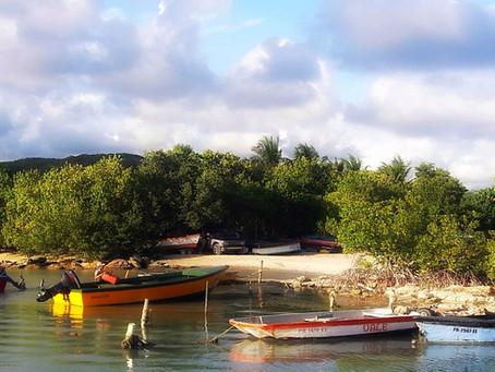 Jacinto en Guánica