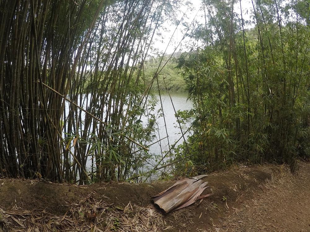 Ya se comienza a ver el agua del Lago entre los bambús.