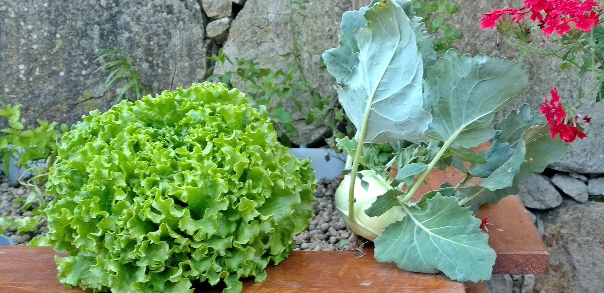 Produtos da Horta Natural do Pouso