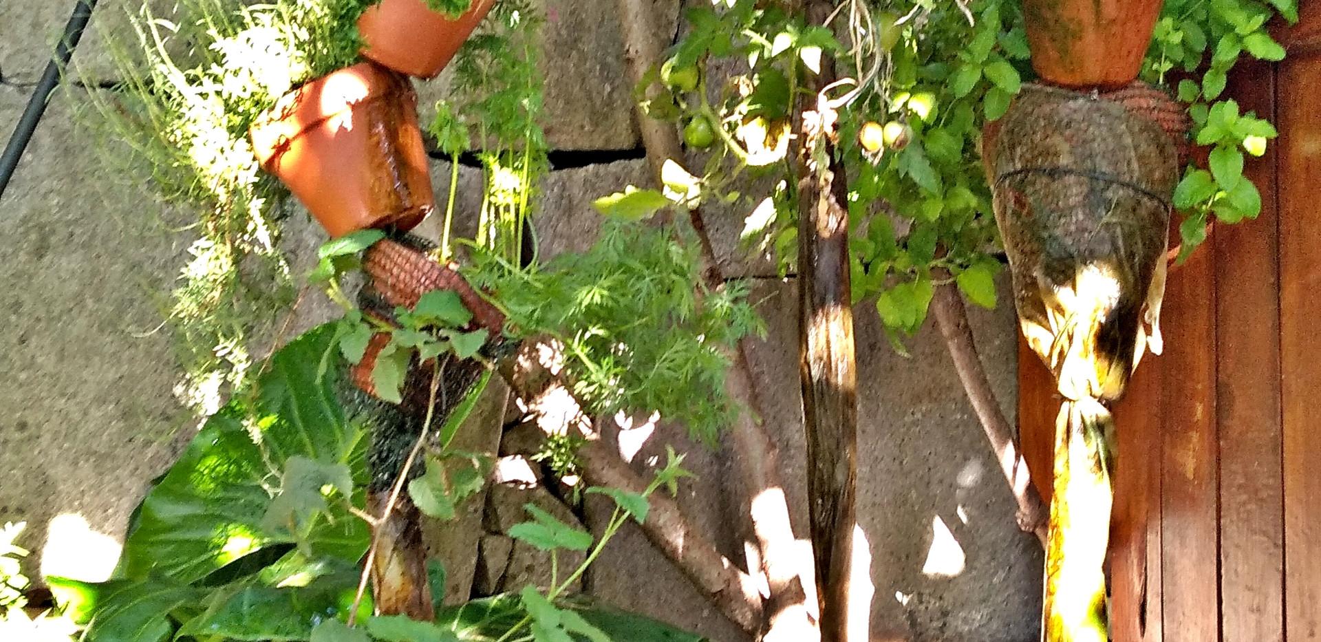 Coluna de Vasos de Aromáticas, Tomateiros Invertidos, Arruda, Hortelã da Ribeira,   Samambaia, Framboesas, Cuphea, Menta, ...