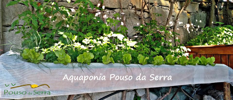 Sistema de Aquaponia do Pouso da Serra