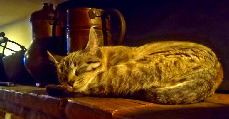 Gatos 1 (4).jpg