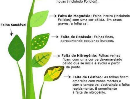 Nutrientes - Carência e suas consequências.