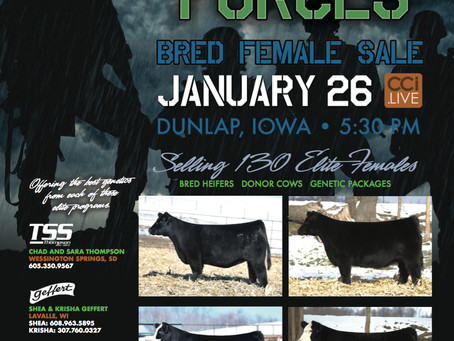 Combined Forces Bred Female Sale - January 26th in Dunlap, Iowa