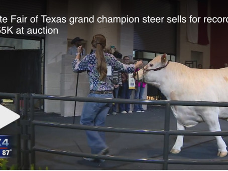 State Fair of Texas grand champion steer sells for record $155K at auction